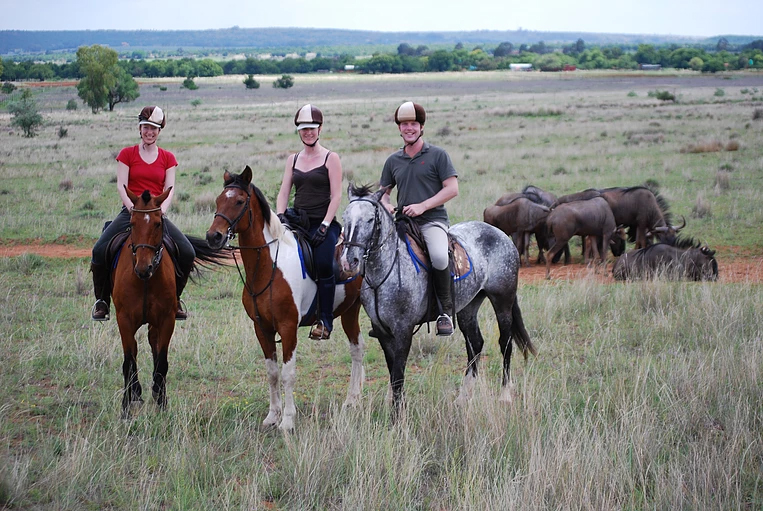 Horses and Wildebeest