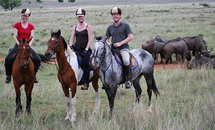 Book a Horse Safari