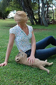 playing with lion cub