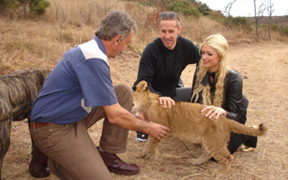 Interactions with Lions