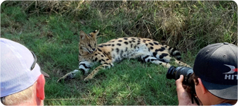 Interactions with Serval